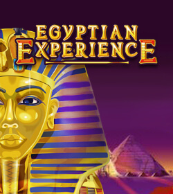 Egyptian Experience